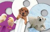 krb-keys-art-puppies